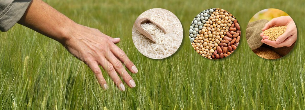 bio-handel-starteite
